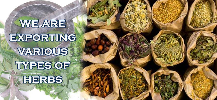 We export various types of Herbs