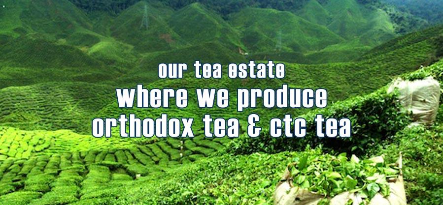 Our own tea estate